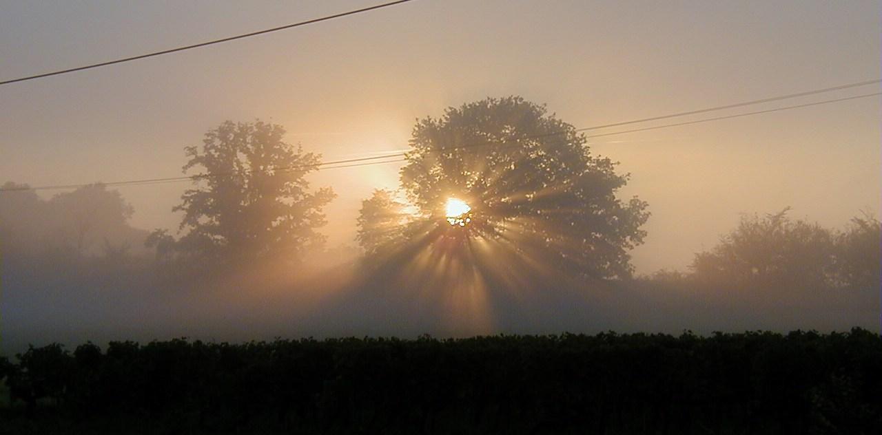 Vignes à Monestier en Dordogne