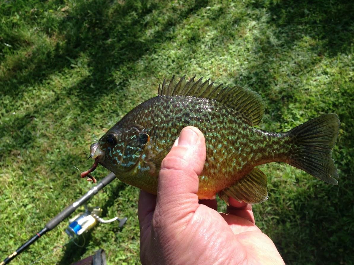 Pêche en Dordogne à la Shertane - Calicoba